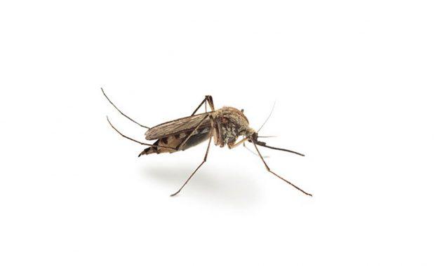 Serie Plagas: Mosquitos.