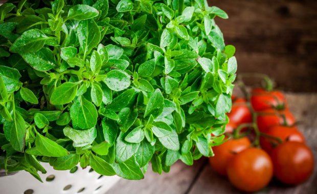 5 Tips sobre contaminación cruzada: separación de alimentos.