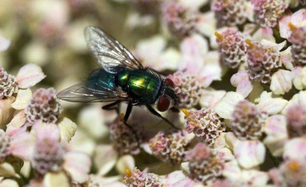 Trampas de luz para moscas: su utilidad en la recopilación de información para la gestión